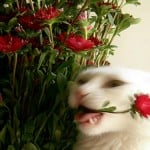 cat-eating-flower