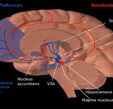 The image shows the dopamine pathway in the brain.