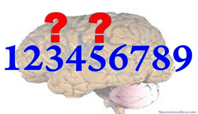 Brain Numbers