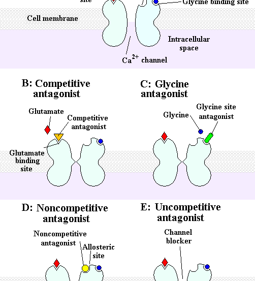 The image shows a chart of the activation and antagonists of NMDA receptors.
