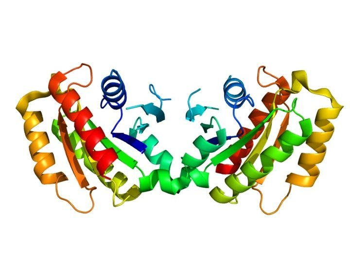 The image shows the structure of the LRRK2 protein.