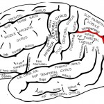 The image shows a drawing of the brain with the lateral intraparietal area (LIP) highlighted in red.