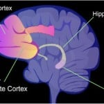 The image shows a diagram of the brain with the prefrontal cortex highlighted.