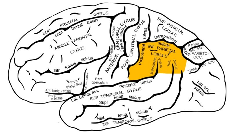 The brain diagram highlights the inferior parietal cortex in orange.