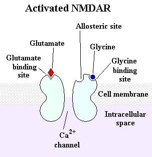 The image is an illustration of an activated NMDA receptor.