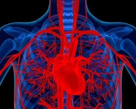 The image shows the circulatory system from the heart.