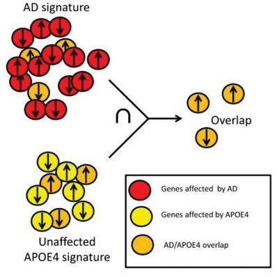 This is a schematic of the Alzheimer's gene expression.