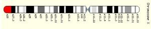 This image shows the molecular location on the X chromosome for MECP2.