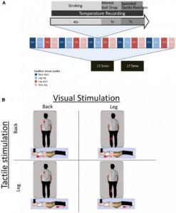 The image shows the experimental procedure of each trial. The caption best describes the image.