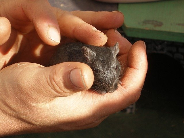 The image shows a hand holding a mouse.