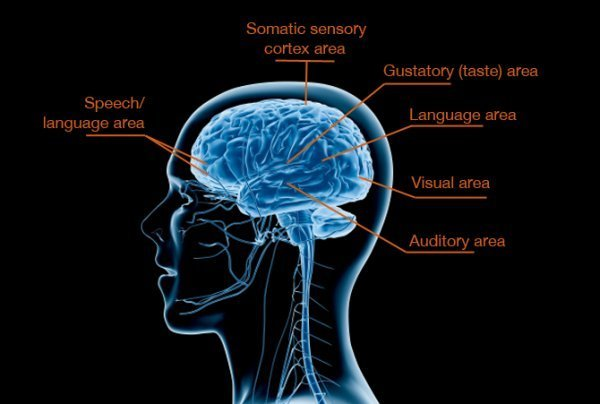 The image shows areas of the brain that can be affected by sensory processing disorders.