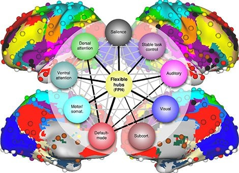The diagram shows 264 brain regions in the human brain color coded by network affiliation.