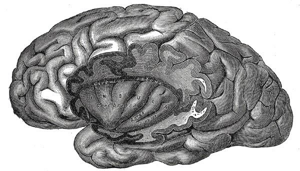 The image shows the location of the insular cortex in the brain.