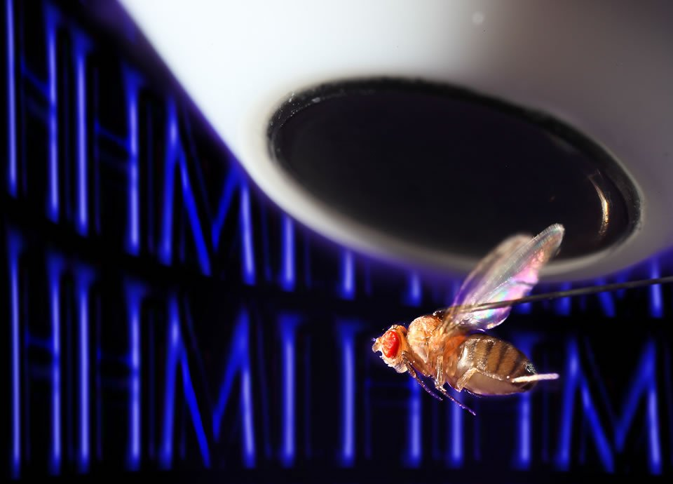 The image shows a fly looking at HHMI.