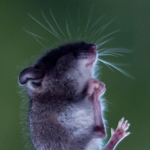 This is a picture of a mouse.