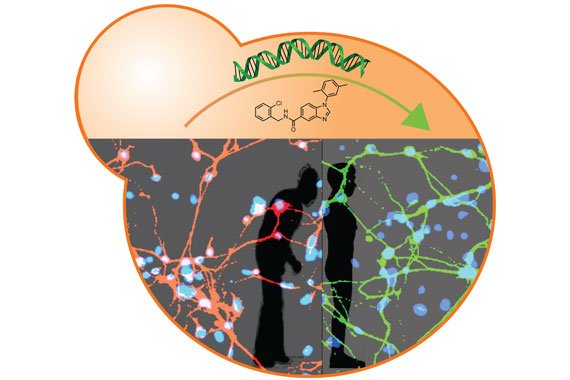 The image shows the dual yeast and stem cell platform. The caption best describes the image.