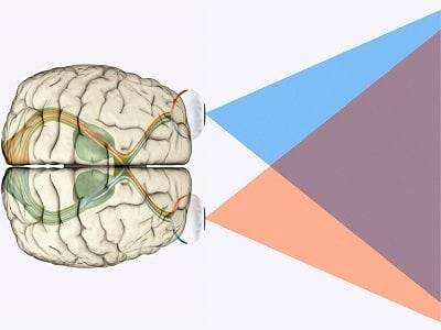 The image shows a brain and visual processing lines.