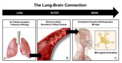 This illustration shows the link between air pollution, the lungs and the brain.