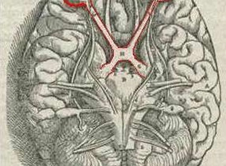 This image of the brain has the visual system outlined in red.