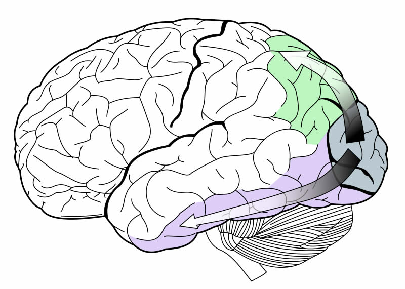 how hardwired is human behavior a Thus, human beings became hardwired to stereotype people based on very small pieces of evidence, mainly their looks and a few readily apparent behaviors whether it was sorting berries or people .