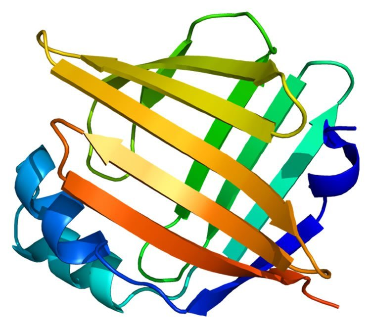 This image shows the structure of FABP5.