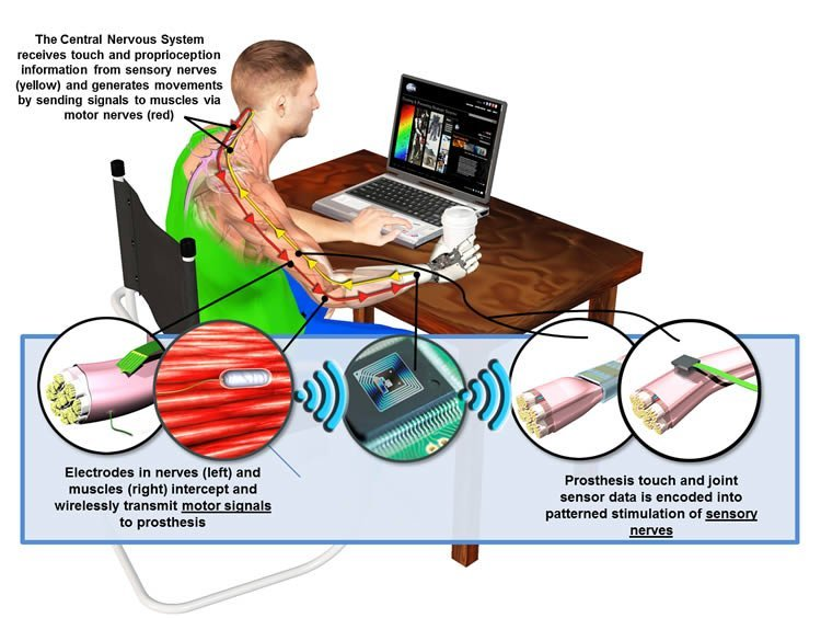 This diagram shows how the HAPTIX system can help restore touch sensation to upper limb amputees.