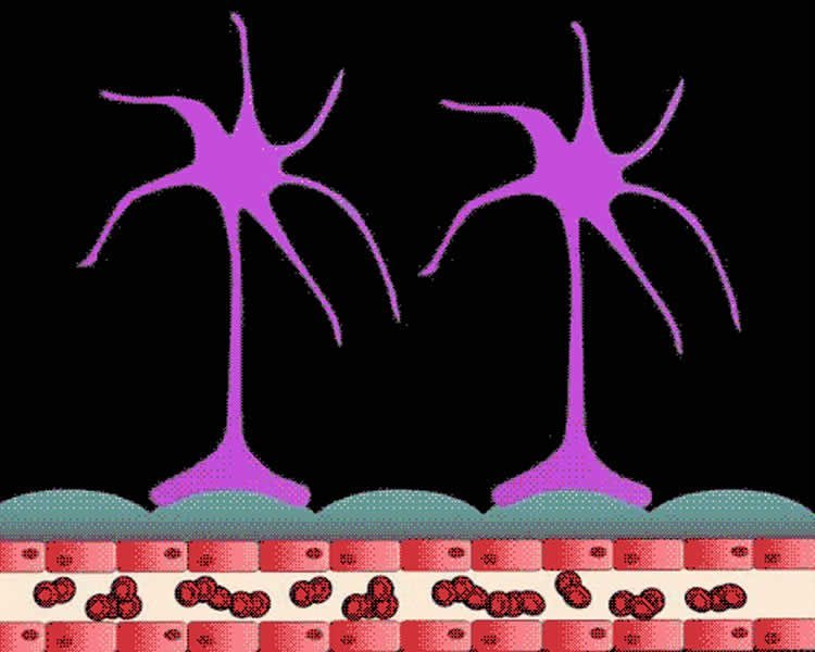 This image shows glioma cells moving.