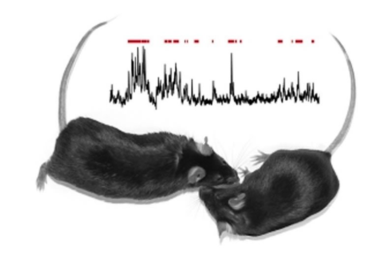 The image shows two mice and lines representing brain waves.