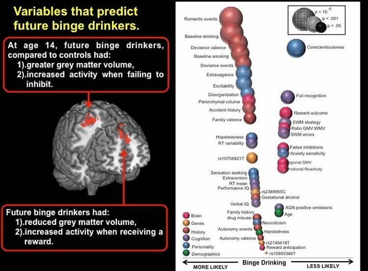 The image shows a the gray matter volume in the brain and relationship to binge drinking.