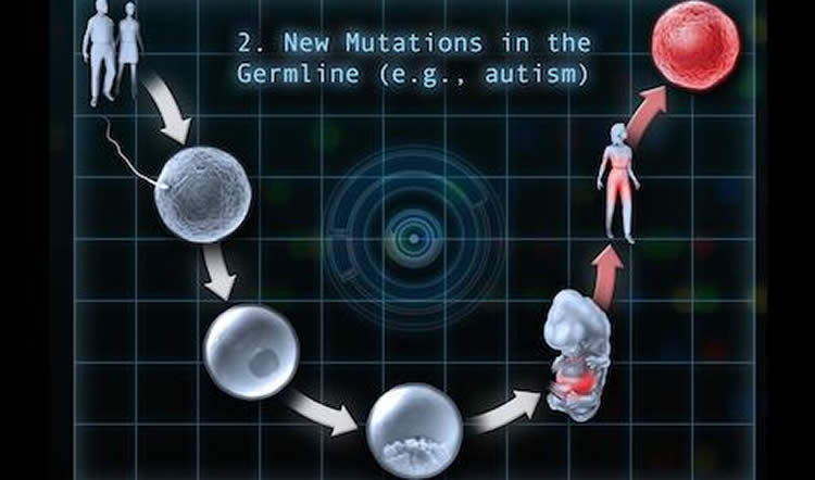 This image is a diagram which details a germline mutation in autism.