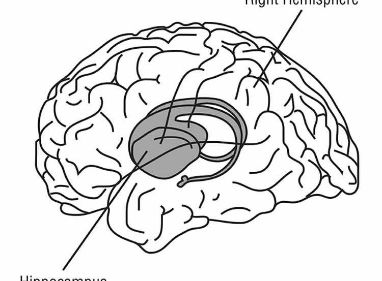 The image shows the location of the hippocampus in the brain.