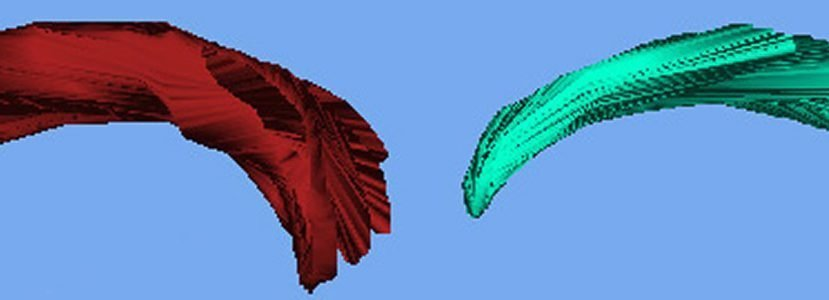 The image shows the different sizes of the sparrow's brain.