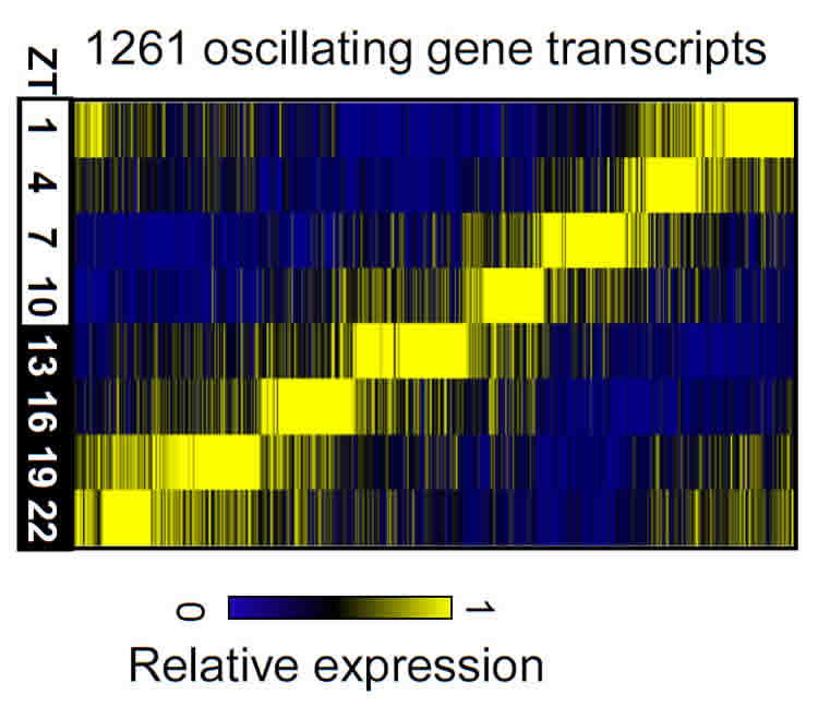 This image shows a graph of the color coded genes.
