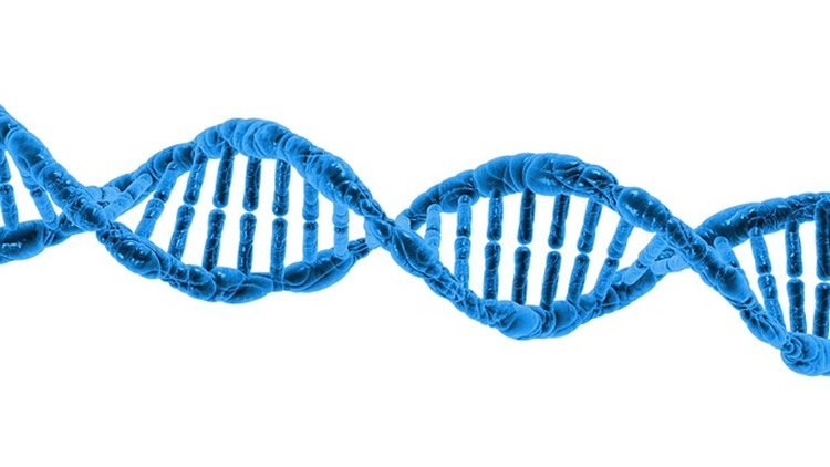 This image shows a dna double helix.