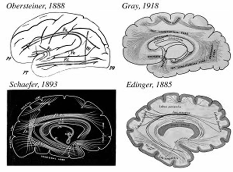 The image shows four drawings of the brain.