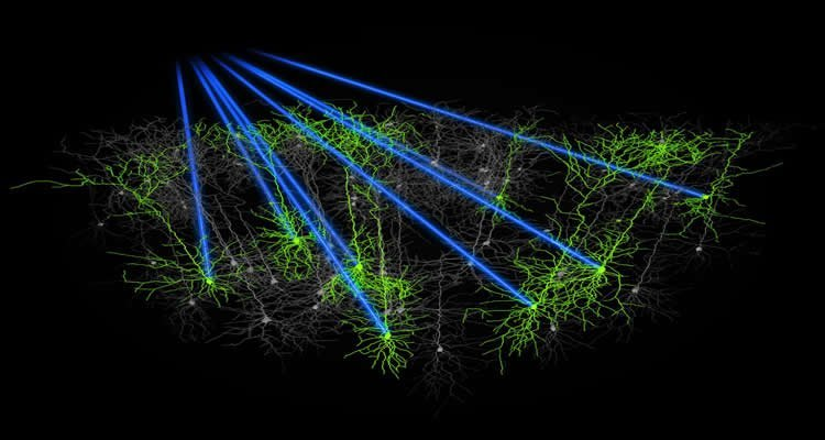 The image shows the holographic targeting lines of the neurons in the mouse cortex.