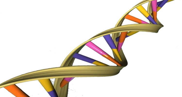 This image is a computer representation of a DNA double helix.