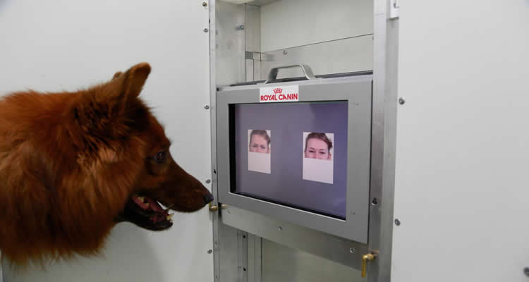 This image shows a dog looking a computer images of human faces.