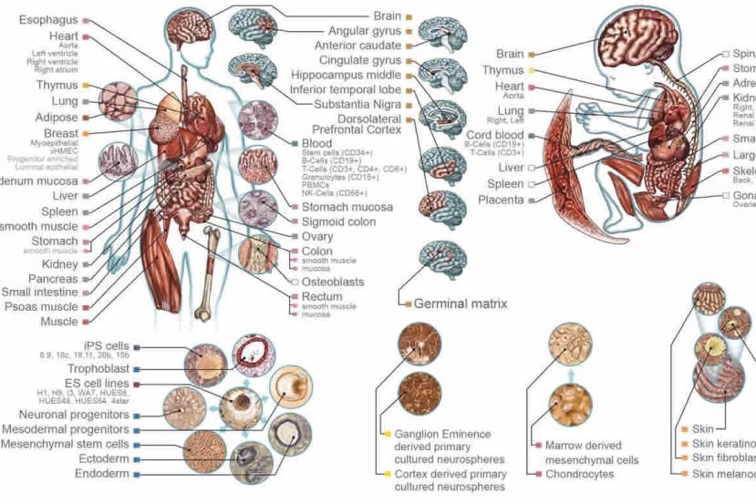 This image shows the human body with parts labelled.