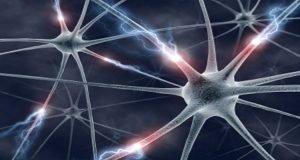 This is an image showing neurons.