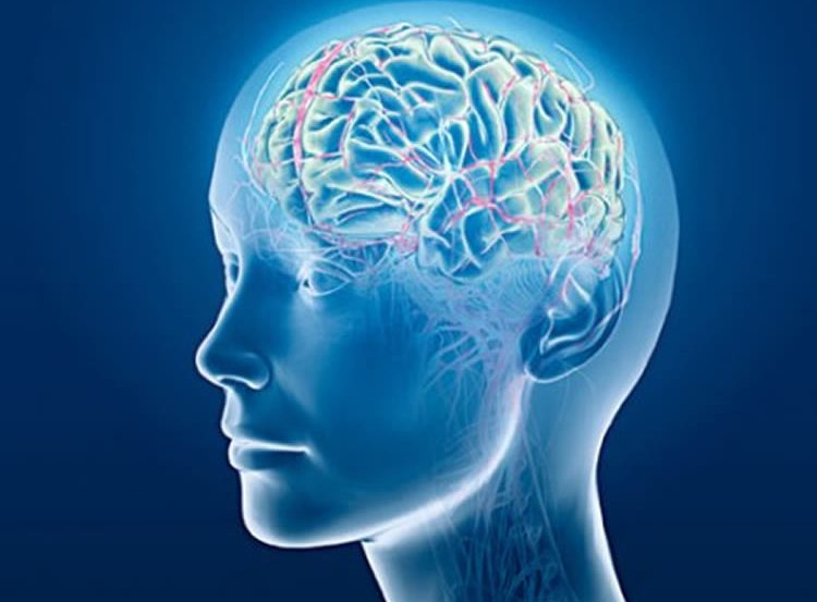 This image shows the outline of a person in blue. The brain can be seen and has some light pink highlights to represent neurons.