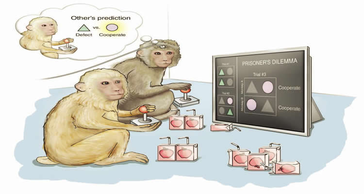 This illustration shows monkeys playing the game mentioned in the post.