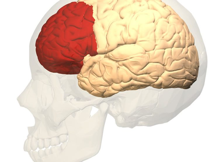This shows the location of the prefrontal cortex.