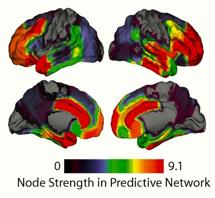 This shows the strength of brain areas mapped on to the cortical surface.