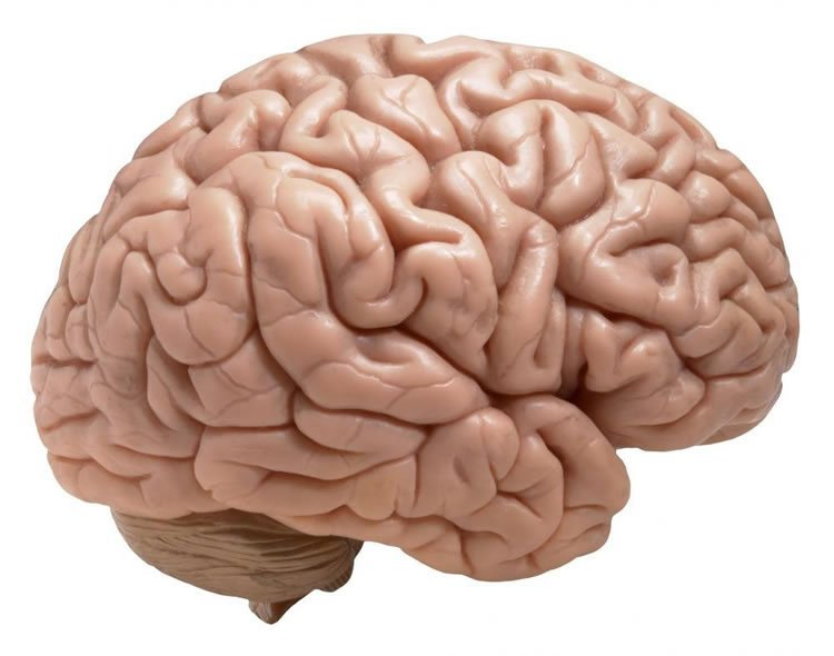 This is an image of a brain.
