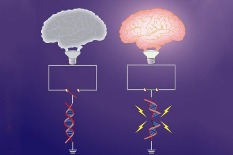 This image shows a drawing of a brain over a dna strand