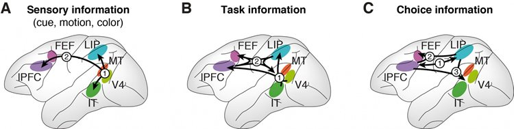 The image shows the results for the dynamic interplay of the sensory, task, and cue information in the brain's cortex.