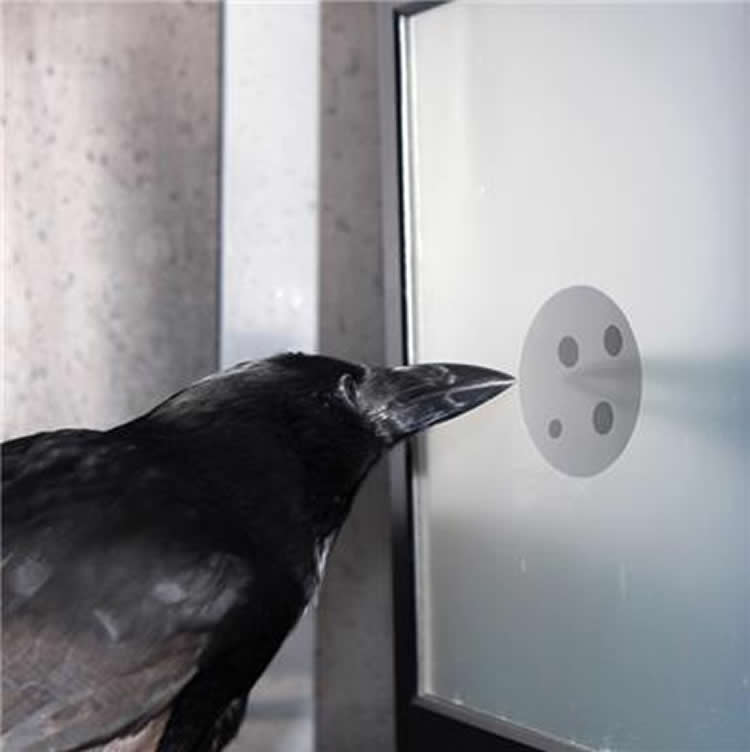 Image shows a crow pecking dots on a computer screen.
