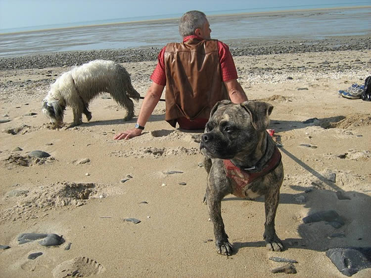 This image shows a man sitting on a beach with his two dogs.