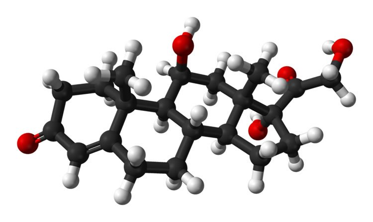 This image shows a 3d molecular structure diagram of cortisol.